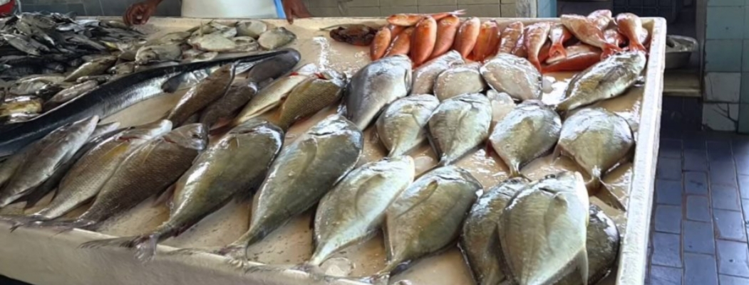 84be5358b لشركة المصرية لتسويق الأسماك..توفير المنتجات للمواطنين بأسعار مخفضة 20 %